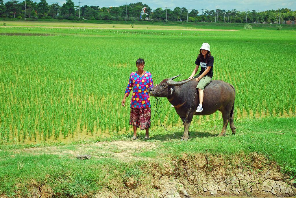 โครงการเกษตรอินทรีย์ ที่สุโขทัย